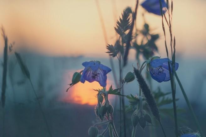 meadow-811339_960_720 (2)
