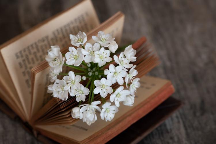 book-3979574_1280.jpg