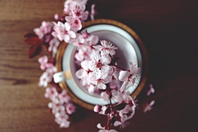 kirsikka.jpg